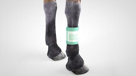 vet-horse-absorption-dressing-2