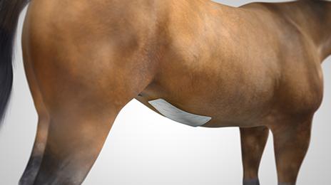 vet-horse-superabsorbent-2